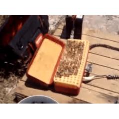 Royal Beekeeping Cells